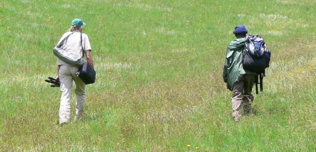 Field Monitoring