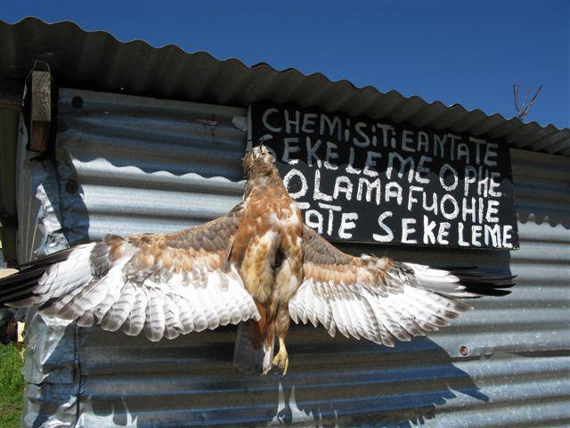 Muthi shop Lesotho