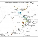 Bearded Vulture movements 23 Feb - 2 March 14