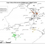 Cape Vulture movements 23 Feb - 2 March 14