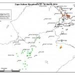 Cape Vulture_23-30 March 14